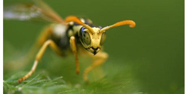 Erste Hilfe nach Insektenstichen