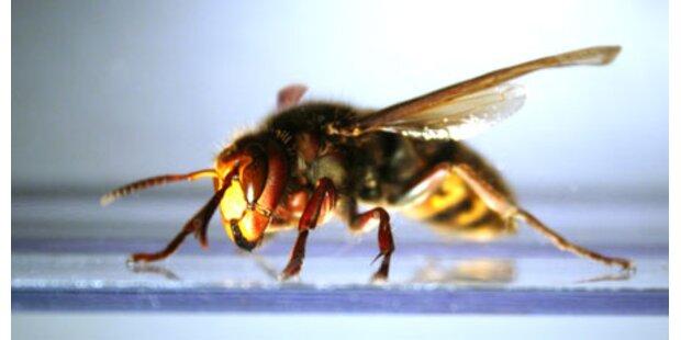 Wespen-Attacke auf Schülergruppe