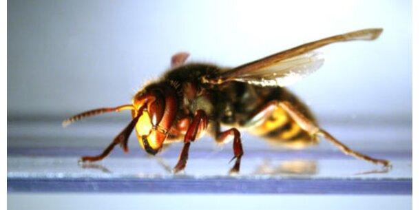 Allergiker im Herbst besonders gefährdet