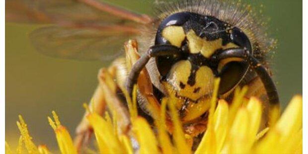Dritter Toter durch Wespenstiche