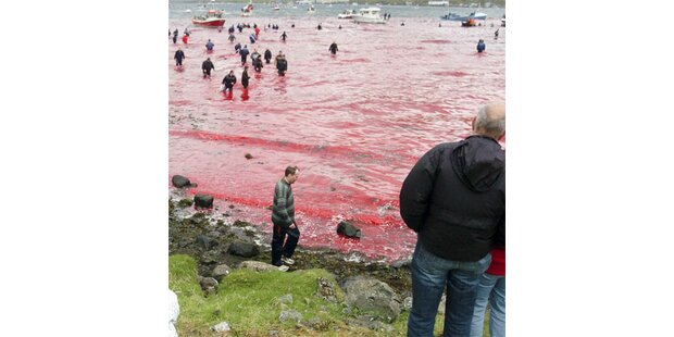 Island macht Jagd auf Wale