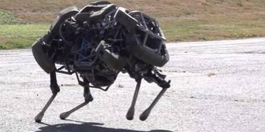 Präsentation von Kampfroboter Wildcat