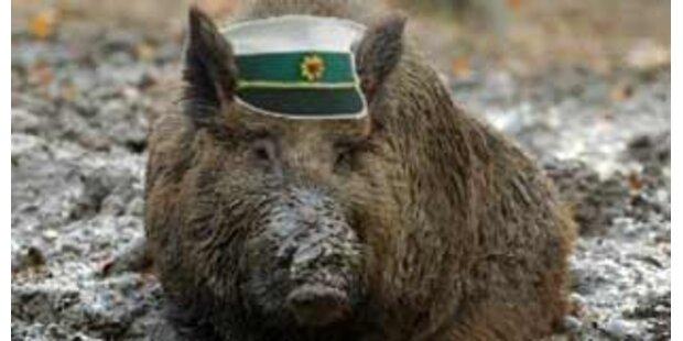 Wildschwein stellte Autodieb in Deutschland