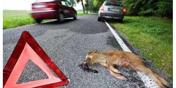 2008 starben 92.000 Tiere