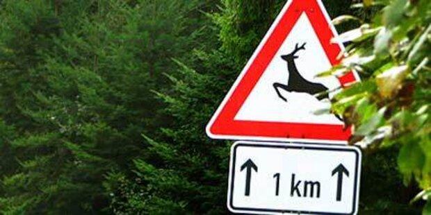 Viele Straßenverkehrsopfer befürchtet