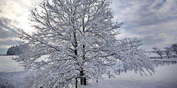 Winter kehrt mit Schneefall zurück