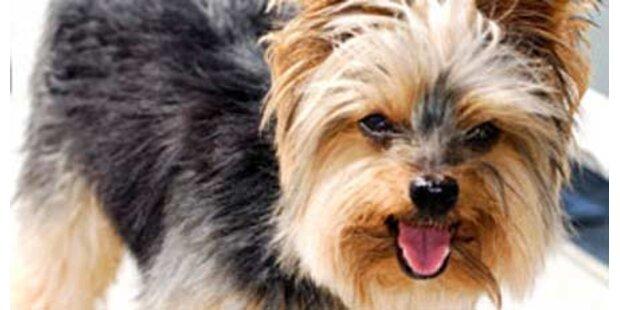 Dritter Hund in einer Woche vergiftet