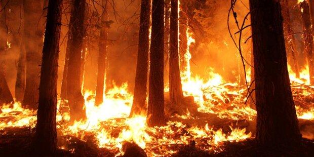 Yosemite-Park-Brand von historischem Ausmaß
