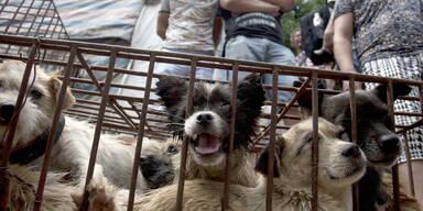 Trotz Corona: Hundefleisch-Festival in China eröffnet