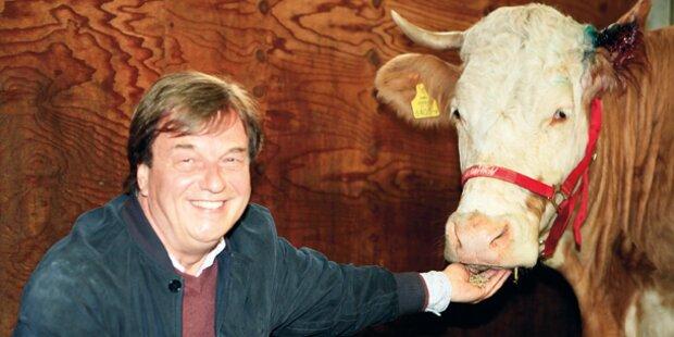 Problem-Kuh Yvonne endlich daheim