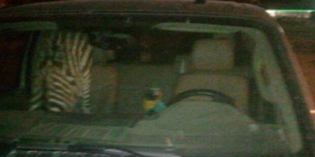 Betrunkener fuhr mit Zebra im Auto