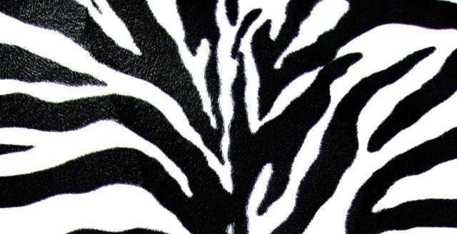 zebra_sxc.jpg