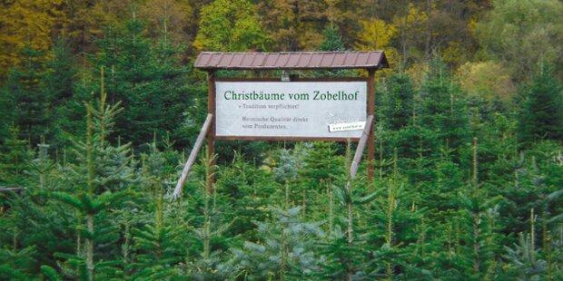 Weihnachtsbaum Selber Schneiden.Ihr Wunsch Christbaum Zum Selberschneiden