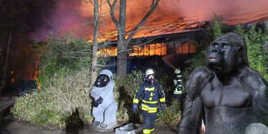 Feuer-Drama: Große Trauer um Gorilla Massa