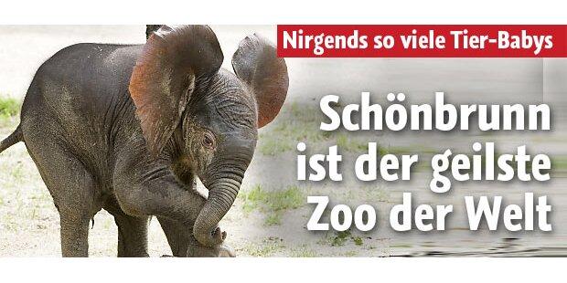 Der geilste Zoo der Welt