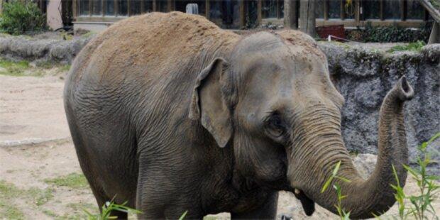 Zahlreiche Tiere sterben bei Brand in Zoo