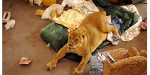 Tierschützer klagen europäische Zoos an